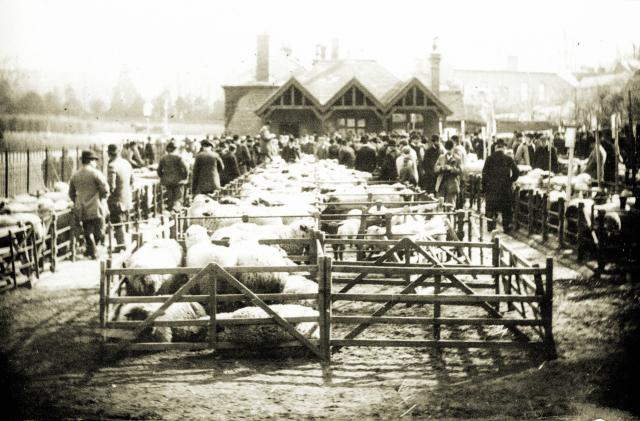 Cattle Market Tring 1890